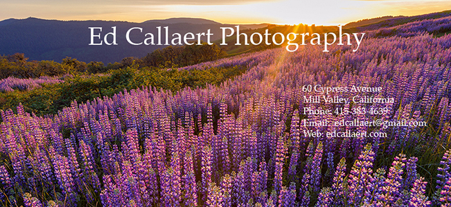 Edgar Callaert Photography